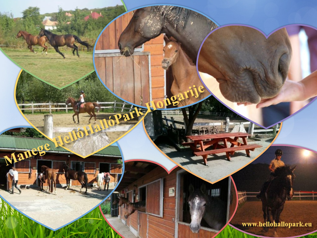Horse Farm, Riding tours, Horse riding, Riding Holidays, farmer campsite HelloHalloPark Hungary